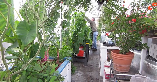 aquaponics-greenhouse-2
