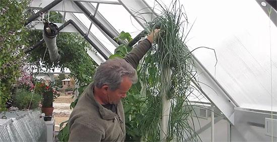 aquaponics-greenhouse-9