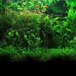 bottle-aquarium-plant-1