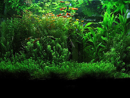 bottle-aquarium-plant-1