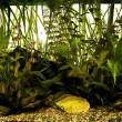 simple-aquarium