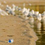マイクロプラスチックは人類最大の負の遺産になるか?