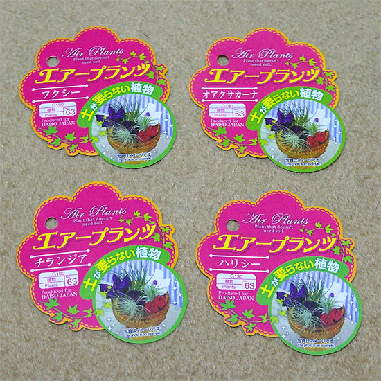 daiso-airplants-2