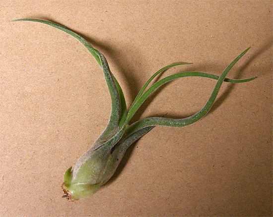 daiso-airplants-4