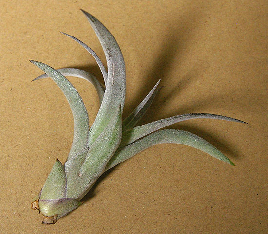 daiso-airplants-7