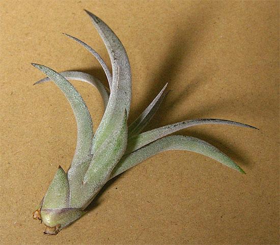 daiso-airplants-7