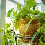観葉植物やアクアリウムの加湿効果はバカにならない 電気不要の加湿器