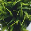 最近のフェイクグリーン (人工観葉植物) はリアルな質感と光触媒による空気浄化がつい