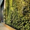 グリーンウォール (壁面緑化) をインテリアに取り入れることで簡単に癒しの空間を作り