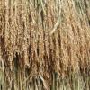 主要農作物種子法 廃止法案が可決 日本の食料安全保障の危機とモンサントの世界戦略