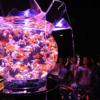アートアクアリウムは動物虐待なのか?批判されても開催する金魚の展覧会